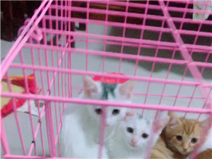 家里自养猫便宜出售!