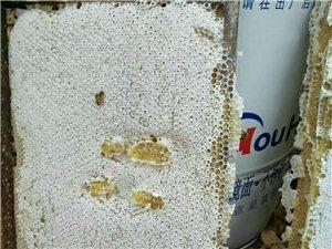 出售蜂群蜂蜜