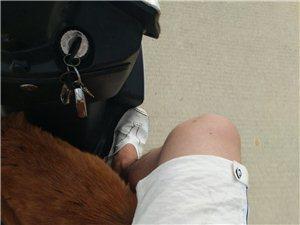 三福旁边的捡的狗,谁家的狗,联系我15555209770