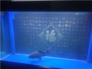 刚买2月,上下过滤,1米5宽60鱼缸,遥控器版,带一条50多公分锦鲤鱼。联系13689858679上...
