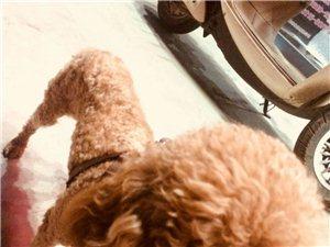 狗狗走丢,寻找狗狗