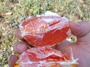 奉节脐橙与赣南脐橙的区别
