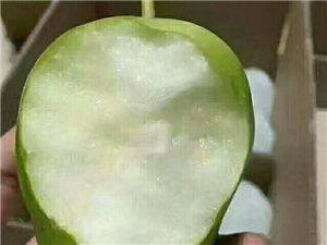富平早酥梨,现已到成熟高峰期,个大,皮薄,脆甜,有需要的老板赶快下单了,微信电话同号:1879139