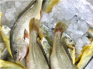 野生春子鱼,一条半斤,个别七八两!