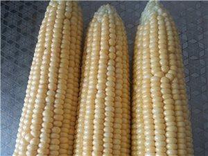 有机营养玉米