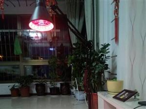 本人有飞利浦立式红外电烤灯一个,原价280元,现150元低价出售,有意者请电话联系