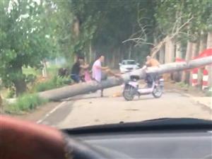 一颗大树拦在路上没人管