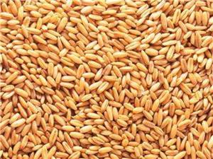 绿色小麦面粉