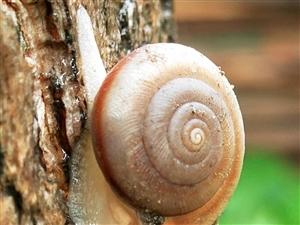 蜗牛找黄鹂鸟