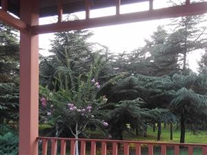 傍晚的西苑植物园