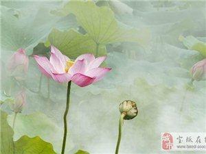 莲花和荷花的区别是什么,莲花与荷花的五大区别
