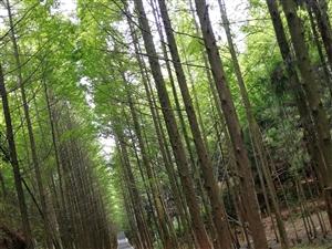 相约大自然的氧吧――森林公园三溪口