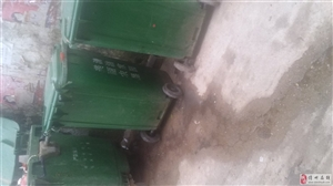 儋州市蓝洋农场市场垃圾问题