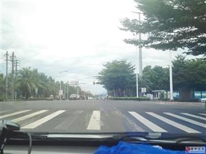 交通信号灯被树木遮挡