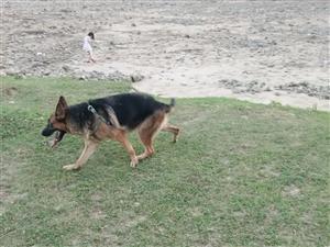 给狗狗寻个地方养