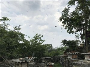 貴州農村自家蜂蜜出售