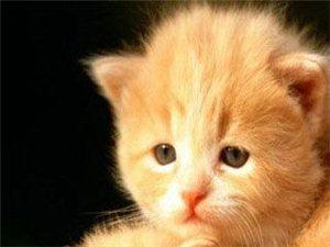 爱猫一族看过来
