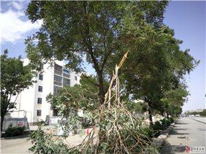 破坏树木的行为可耻