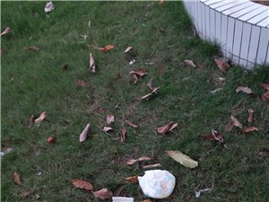 高州县域副中心圣母文化广场垃圾满地