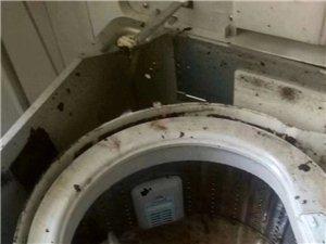 专业家电清洗技术培训。