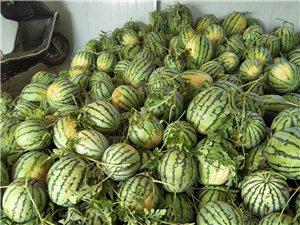 涡南镇邵大村二百亩晶心麒麟西瓜今天正式上市,大量批发,欢迎各地西瓜客商前来批发。