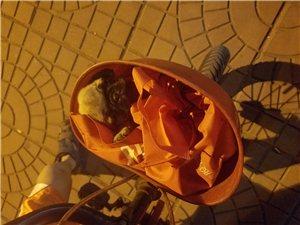 出售2個多月,純鷹版巴哥犬,小公