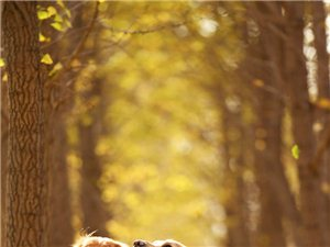 金毛,比熊,贵宾,拉布拉多,边牧……