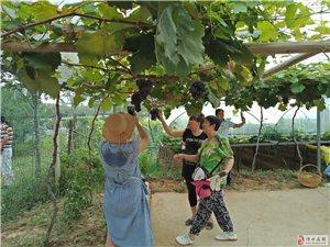 溧水在线网和状元山葡萄园