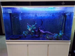 cleair aquatics鱼缸 1米2长,原厂泵和灯,1000出,只可小刀,大刀面谈,上门自提,...