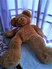 搬家,原七百多大熊低价出售,联系电话15123646720