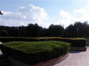 雨后的西苑植物园