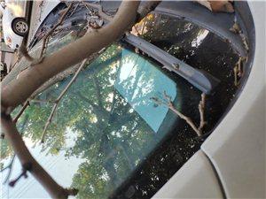 城市管理靠大家,天降树枝砸坏车