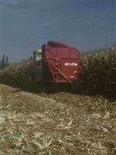 雷沃六行玉米联合收割机