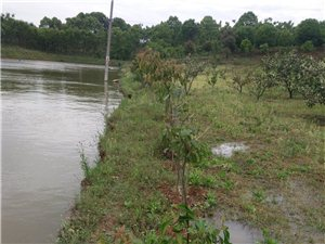 防洪抗旱工程到底是利民还是谋利