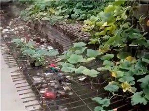 爱护水资源不乱扔垃圾