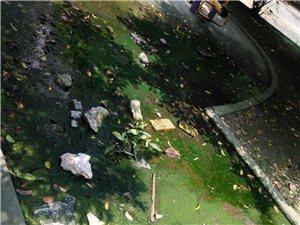 学府华庭小区太臭了,下水道堵了几个月,杂草丛生