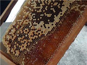 自己家养的蜂蜜