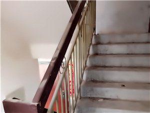 七里头廉租房住客养狗卫生及差,跳蚤整栋楼都是??