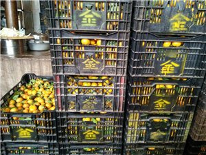 小橘子6塊一斤
