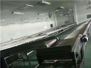大型红枣加工厂收购加工销售