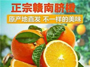 正宗赣南脐橙出售!