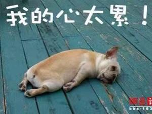 人有时候不是人,但狗永远还是狗!