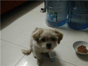 送一只小狗,一��月左右!!