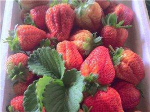 放心绿色草莓