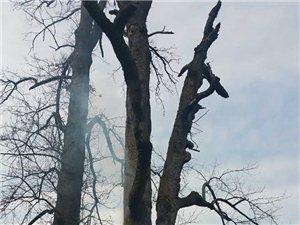 昨天晚上我们寨子的百年大树自燃