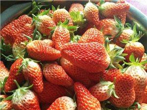 绿色新鲜草莓