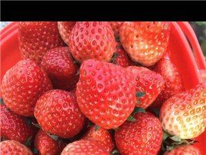 火龙果,草莓,蔬菜自助釆摘