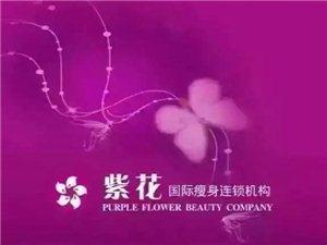紫花国际 诚招全国加盟商