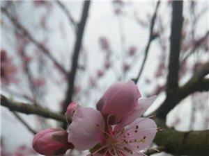 开在春天里的花�D�D龙潭