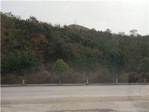汽车陪练、上路行驶、半坡起步、侧方位停车、